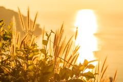 Tropical grass in golden light at sunse6 near to the ocean Stock Image