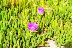 Tropical green Alpine plant. Bali, Crete Royalty Free Stock Photos