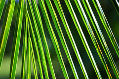 Tropical green background Stock Photos