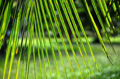 Tropical green background Royalty Free Stock Photography