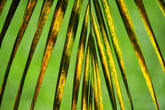 Tropical green background Stock Photography