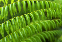 Tropical green ferns. Stock Image