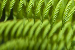 Tropical green ferns. Stock Photos