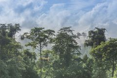 Tropical Green Forest. Royalty Free Stock Images
