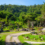 Tropical green garden in Thailand Stock Photography