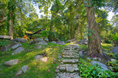 Tropical green garden in Thailand Royalty Free Stock Image