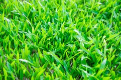 Tropical green grass Stock Images