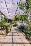 Tropical green house of butterfly garden Stock Photos