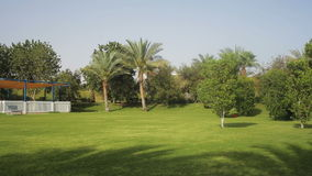 Tropical green lawn with palm trees on the territory stock footage