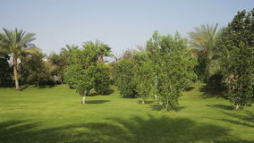 Tropical green lawn with palm trees on the territory.  stock footage
