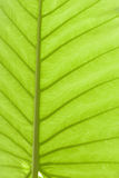 Tropical Green Leaf Stock Photos