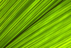 Tropical green leaf - abstract background Royalty Free Stock Images