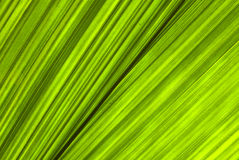 Tropical green leaf - abstract background Stock Image