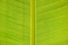 Tropical green leaf background Royalty Free Stock Photography
