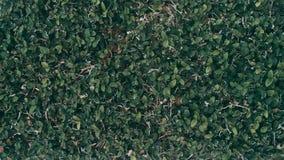 Tropical green leaf background, Dark tone theme.  stock photos