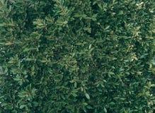 Tropical green leaf background, Dark tone theme.  royalty free stock photo