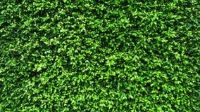 Tropical green leaf, contrast. Vertical garden with tropical green leaf, contrast Stock Photo