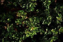 Tropical green leaf, contrast. Vertical garden with tropical green leaf, contrast Royalty Free Stock Photography