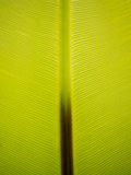Tropical green leaf Stock Photos