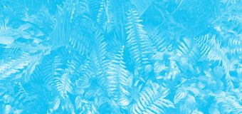 Vertical garden with tropical leaf. Monotone blue.  royalty free stock images