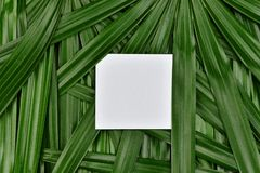 Tropical green leaves background with paper frame copy space in the center, Natural pattern concept. Tropical green leaves background with paper frame copy Royalty Free Stock Images