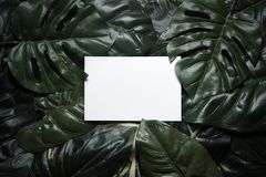 Tropical green leaves composition background Royalty Free Stock Photos