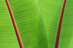 Tropical green leaves Stock Image