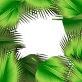 Tropical green leaves illustration Stock Images
