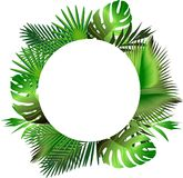 Tropical green leaves illustration Stock Photo