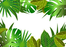 Tropical green leaves illustration Royalty Free Stock Photos