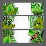 Tropical green leaves illustration set Stock Photo