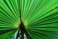 Tropical green leaves layout. Tropical palm background stock photography
