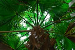 Tropical green leaves layout. Tropical palm background stock photos