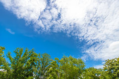 Tropical Green leaves on white cloud-sky background1 Royalty Free Stock Photo