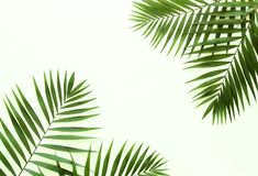 Free Tropical Green Palm Branches Pattern On A White Background. Stock Photography - 128304322