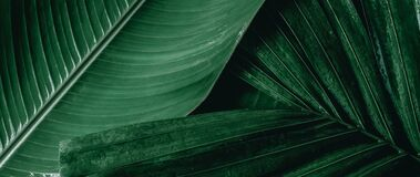 Green leaf texture, nature background