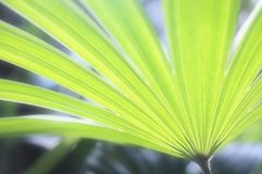 Tropical green palm leaf under sunshine in the garden stock image