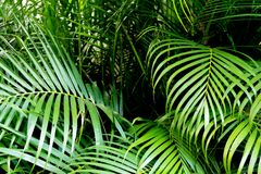 Tropical green palm leaves background. Nature pattern concept Royalty Free Stock Photos