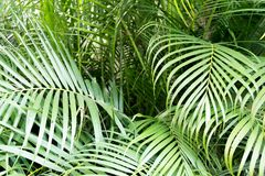 Tropical green palm leaves background. Nature pattern concept Stock Photo