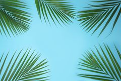 Tropical green palm leaves on blue background. royalty free stock image