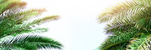 Tropical green palm leaves and branches on blue sky with copy space. Sunny day, summer concept. Sun over palm trees. Travel, holiday background. Banner Stock Image