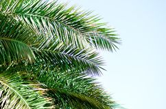 Tropical green palm leaves and branches on blue sky with copy space. Sunny day, summer concept. Sun over palm trees. Travel, holiday background Royalty Free Stock Photo