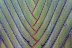 Tropical green palm tree background macro Royalty Free Stock Photos