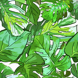 Tropical green palm tree leaves. Vector summer seamless pattern. Royalty Free Stock Photos