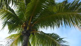 Tropical green palm tree. Overhead shot stock video footage
