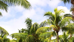 Tropical green palm trees with blue sky. Moving stock footage