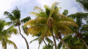 Tropical green palm trees. Moving in the wind stock footage