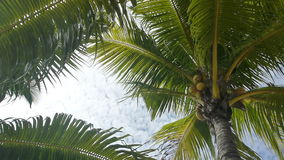 Tropical green palm trees. Overhead shot stock video footage