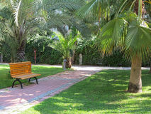 Tropical green park with palms and bench Stock Photo