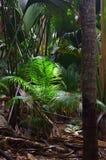 Jungle Valle de Mai on the Seychelles islands. A tropical green rainforest on the Seychelles island Praslin, Valle de Mai royalty free stock photography